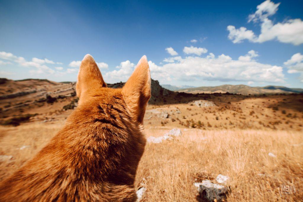 Fotografía de mascotas en Asturias